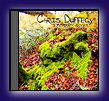 Click for more about the Mossy Ground CD by Chris Duffecy!